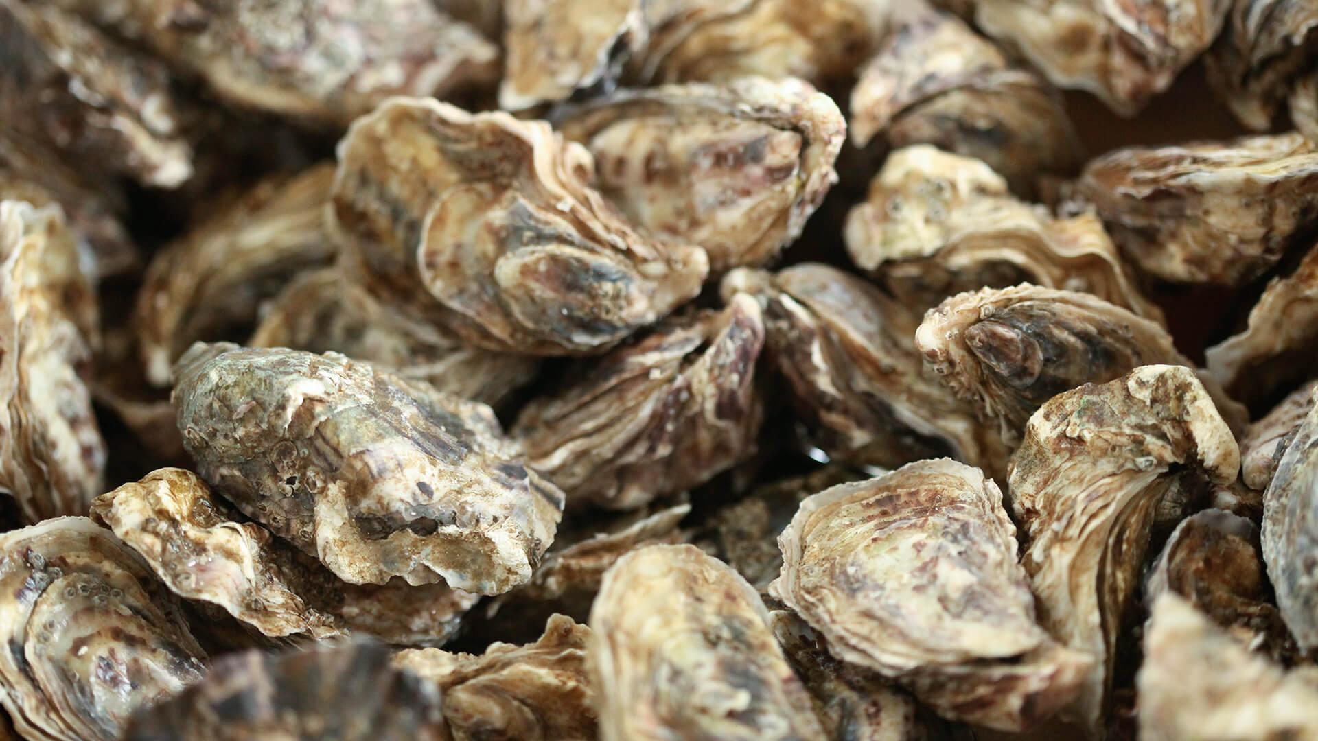 Les huîtres des Parcs de l'impératrice sont servies au Relais du Cap